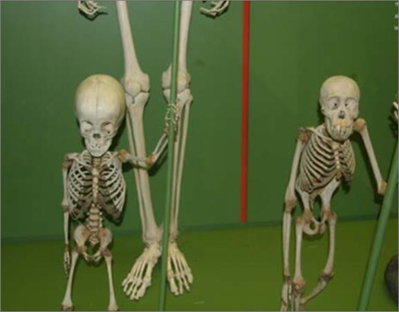 evolusi penciptaan manusia